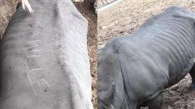 法國,動物園,犀牛,刻字。(圖/翻攝自臉書)