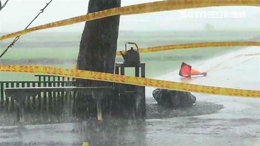 白鹿狂風暴雨肆虐台東 金城武樹現況曝光圖台東池上鄉民代表許金興授權提供