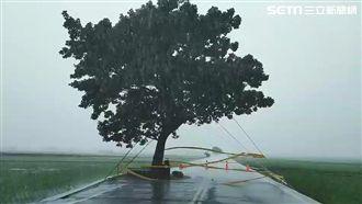 白鹿狂風暴雨肆虐 金城武樹現況曝光
