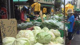 白鹿,颱風,價格,回跌,菜價