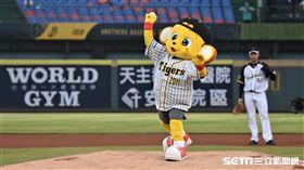 阪神虎吉祥物Lucky、Ki-Ta開球。(圖/記者王怡翔攝影)