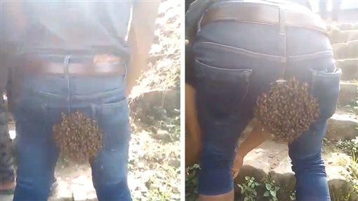 印度,蜜蜂,女王蜂,屁股,那加蘭。翻攝自推特@MmhonlumoKikon