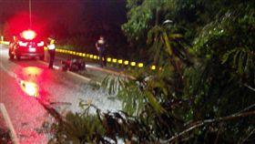 台南,白鹿颱風,路樹倒塌,車禍,穿刺傷.騎士,安南區(圖/翻攝畫面)