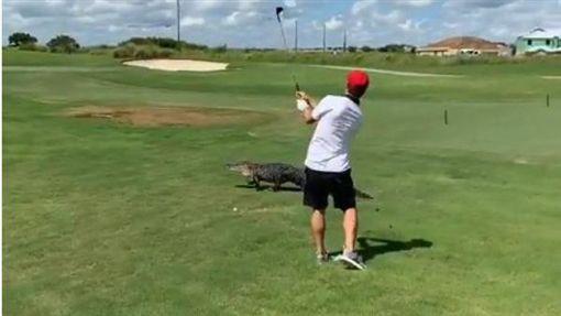 鱷魚,美國,佛羅里達,高爾夫(圖/翻攝自IG)