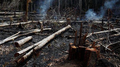 南美洲,亞馬遜,森林大火,延燒,復育(圖/翻攝自推特)