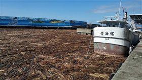 颱風白鹿走後,台東富岡漁港被漂流木塞爆