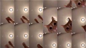 橘貓短片。(圖/翻攝自thesandmancat ig)