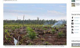 印尼,棕櫚油,熱帶雨林。(圖/翻攝自mongabay)