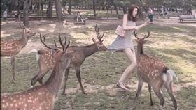 奈良鹿攻擊正妹。(圖/翻攝自爆怨公社)