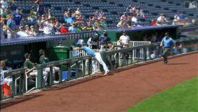 ▲皇家三壘手接球踩進板凳區,運動家打出最短距離高飛犧牲打。(圖/翻攝自MLB官網)