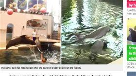 保加利亞,水族館,海豚,觀眾,猝死 https://metro.co.uk/2019/08/30/baby-dolphin-dies-half-way-performance-water-park-10655483/