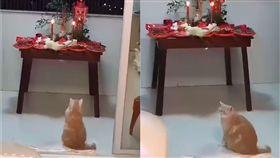 貓,拜拜,供桌,中元節(圖/翻攝自貓咪也瘋狂俱樂部)