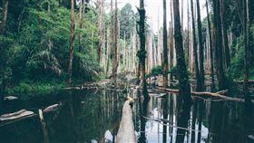 亞馬遜,伐林,經濟利益,土地開採,奴役勞工(示意圖/圖取自Unspalsh圖庫)
