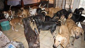 愛狗人士,切拉菲利普斯說明自己家中有97名流浪狗,希望大家伸出援手。(圖/翻攝自Chella Phillips臉書)
