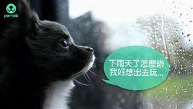 ▲(圖/PetTalk:說寵物)