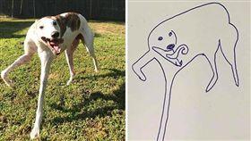 美國搞笑寵物插畫。(圖/翻攝自FlatDogDoodles臉書)