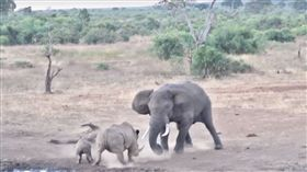 一名旅客在南非拍下大象與犀牛對決畫面。(圖/翻攝自Youtube, Kruger Sightings)