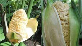 玉米,巴拿馬草,泡麵,拉麵,推特。(合成圖/翻攝自推特)