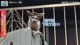 小貓受困高處母貓心急如焚 網友神配音瞬間歪樓!
