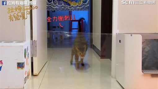 貓咪助跑衝破路障。(圖/拉姆有幾噗臉書授權)