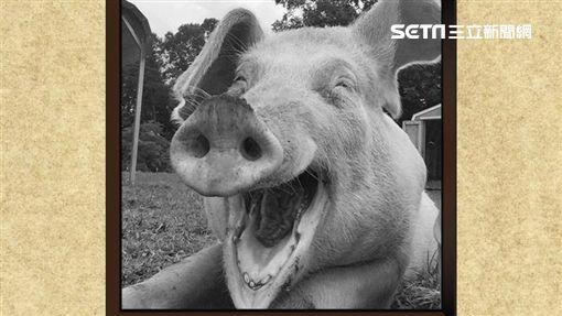 非洲豬瘟,菲律賓,肉,台灣,防檢局