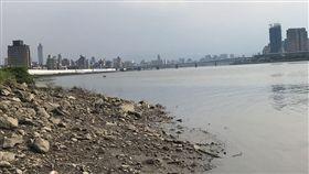 台北市迪化抽水站外河面發現1具女性浮屍(讀者提供)