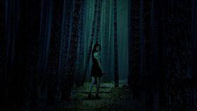 鬼月,陰森,樹林,森林,山路(圖/翻攝自pixabay)