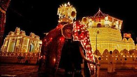 斯里蘭卡,大象,象夫,遊行,康提佛牙節。(圖/翻攝自推特)