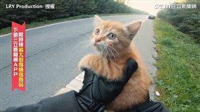 超驚險!小貓受困大馬路 騎士秒下車暖心救援