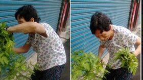 超狂嬤98歲「滿頭黑髮」 嬤:沒染過髮!網跪求秘笈(圖/翻攝自爆廢公社)