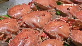 (透視)秋螃蟹藏毒1900