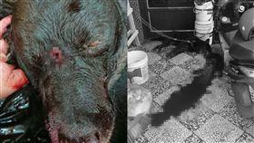 屏東,小狗,被咬,攻擊,持槍,射殺,主人,心痛,黑狗