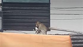 猴子抱貓咪。(圖/翻攝自Viral Press YouTube)