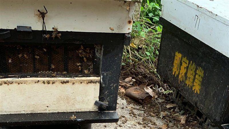 嘉義/梅山500萬隻蜜蜂死亡 警方調查緝兇