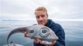 挪威,垂釣,鯊魚,巨眼魚,大西洋銀鮫。(圖/翻攝自推特)