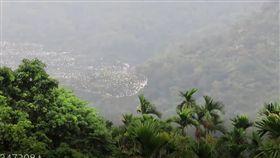 嘉義,梅山,太興村,黃頭鷺,簡慶輝,遷徙,空拍(圖/簡慶輝提供)