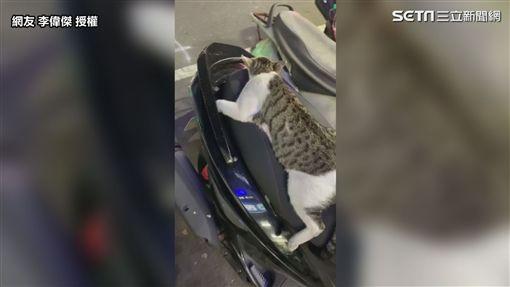 ▲車主下班後發現一隻貓趴在他的車上。(圖/網友 李偉傑 授權)