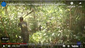 人權觀察,亞馬遜雨林,森林砍伐,黑幫,企業結盟(youtube)