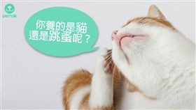 ▲(圖/翻攝自PetTalk:說寵物)