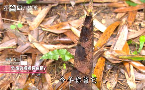 在台灣的故事-阿里山的超狂日常,放炮採筍為生存(節目截圖)