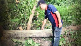新北,樹林,工安意外,墜落,樹幹,壓死,砸頭(圖/翻攝畫面)
