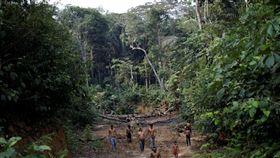 巴西,森林,產值,第三年,成長(圖/路透社/達志影像)