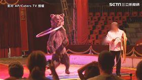 ▲馬戲團的動物權爭議,在近幾年一直都備受關注,表面上看起來歡樂、和諧的表演節目,背後其實隱藏著偌大的爭議。(圖/AP/Caters TV 授權)