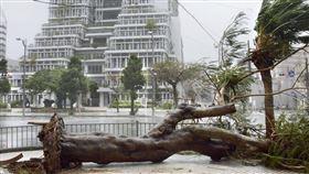 日本沖繩縣21日受到今年第17號颱風塔巴侵襲,強風造成部分地區行道樹被吹斷傾倒。(圖/中央社/共同社提供)