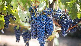葡萄,水果 (圖/翻攝自pixabay)