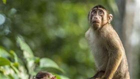 16:9 真的是「抓猴」瞬間!猴子啪啪啪被攝 戲精上身表情超生動 搞笑野生動物攝影獎 圖/翻攝自Comedy Wildlife Photography Awards https://www.comedywildlifephoto.com/gallery/2019_finalists.php