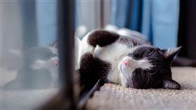 ▲看睡姿也能看到信任度(圖/Pixabay)