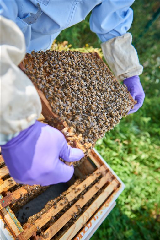 ▲賓利生產蜂蜜(圖/翻攝網路)