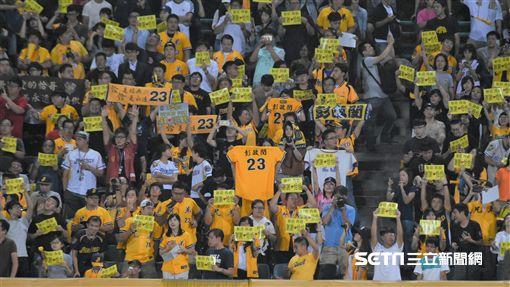 彭政閔新莊棒球場球迷。(資料圖/記者王怡翔攝影)