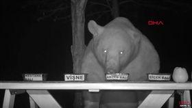 熊偷吃蜂蜜,翻攝自YT
